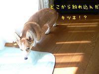 P1010187_edited-1